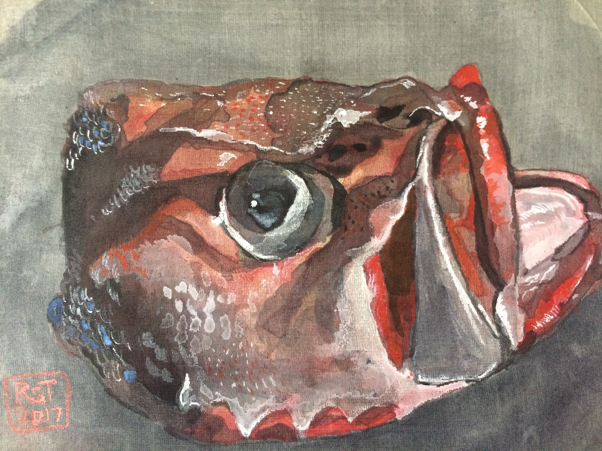 Fish Head Red